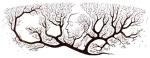 160 cumpleaños de Ramón y Cajal