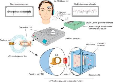 Esquema que muestra cómo el implante recoge la señal cerebral, la interpreta y la transforma en una señal eléctrica que ilumina un LED (Fuente: Folcheret al., 2014)