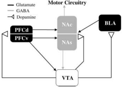 Modelo de rutas dopaminérgicas, glutamatérgicas y GAB Aérgicas implicadas en la inducción y expresión de la sensibilización conductual (Fuente: Vanderschuren y Kalivas, 2000)