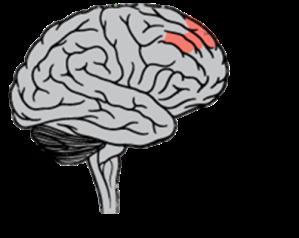 Localización del córtex prefrontal dorsolateral derecho