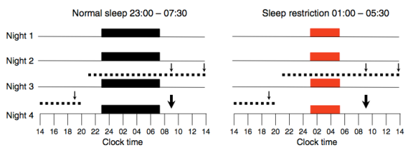 ig. 1 Study protocol. Black bars, consecutive nights with bedtimes from 23:00 hours to 07:30 hours in the normal sleep condition; red bars, consecutive nights with bedtimes from 01:00 hours to 05:30 hours in the sleep restriction condition; dotted lines, 24 h blood-sampling period; thin arrows, identical meals served at 09:00, 14:00 and 19:00 hours; thick arrows, IVGTT