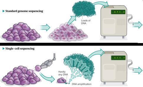 Esquema con la diferenecia entre el secuenciado completo y el secuenciado de célula única (Fuente: Owens, 2012)