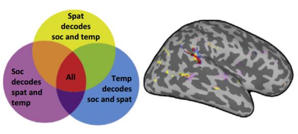 Mecanismos comunes para el procesamiento de la distancia, el tiempo y los lazos sociales.