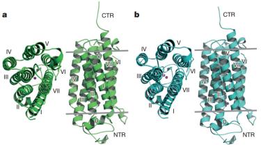 Visión general de los receptores a) ADIPOR1 y b) ADIPOR2 (Fuente: Tanabe et al., 2015)