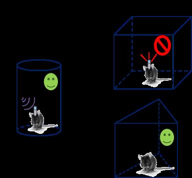 Cuando al grupo expuesto a un entorno seguro se le estimularon los mismos subgrupos de neuronas activados en la asociación de miedo condicionado, respondieron con miedo aunque no hubieran experimentado antes ese contexto.