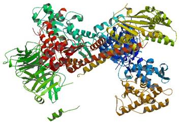 Estructura del complejo Arp2/3