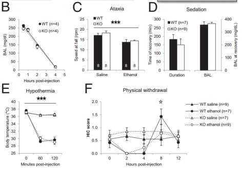 Diferencias entre ratones carentes de GIRK3 (KO, blanco) y control (WT, negro) en (B) niveles de etanol en sangre, (C) pérdida de equilibrio, (D) somnolencia, (E) temperatura corporal y (F) excitabilidad por retirada (Fuente: Herman et al., 2015)