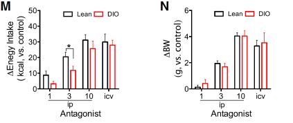 Cambios en la ingesta (M) y el peso corporal (N) tras seis días de administración de ARL. Blanco = ratones cotrol; Rojo = raontes obesos por dieta (Fuente: Ottaway et al., 2015)