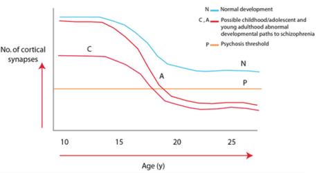 Transcurso de la poda sináptica en sujetos normales y con esquizofrenia (Fuente: McGlashan and Woods, 2011)